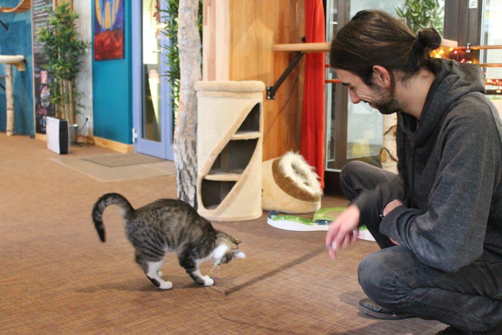 Josh spielt mit Katze