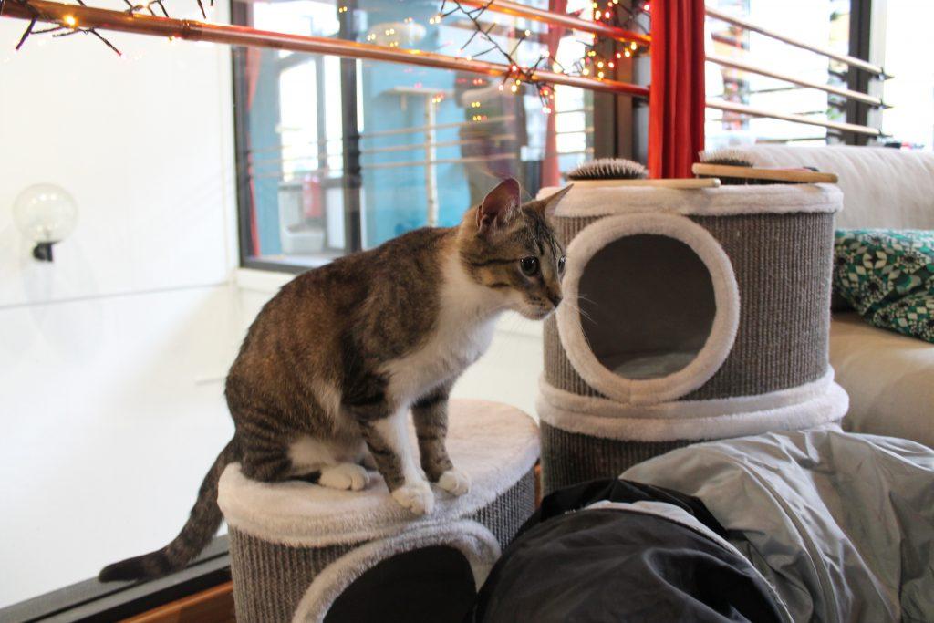 Katze im Café